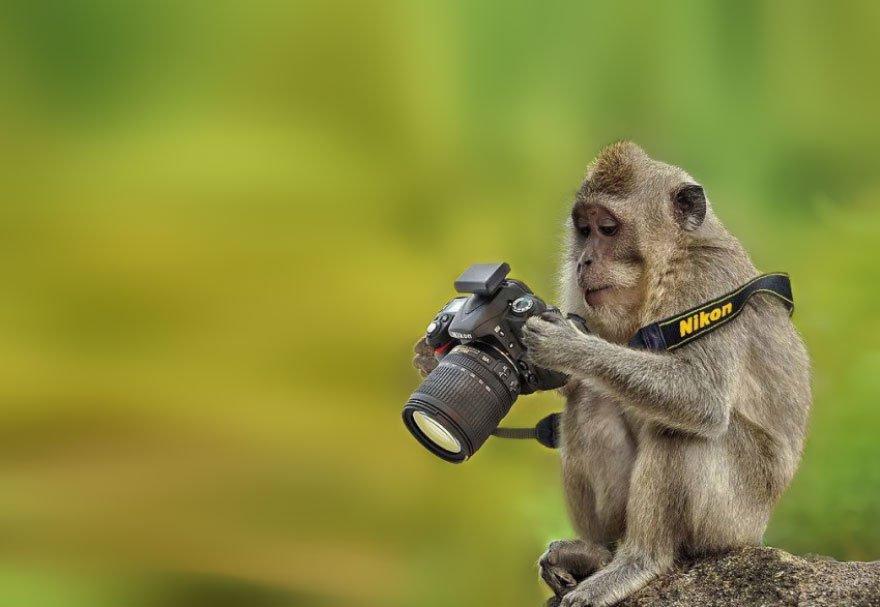 Os animais também gostam de fotografia